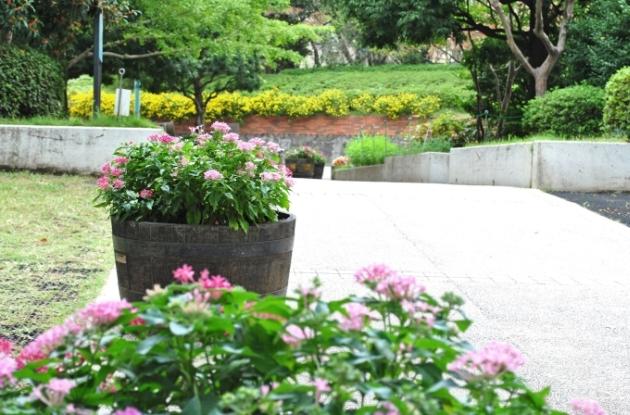 Парк возле языковой школы