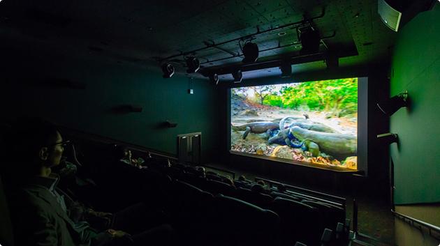 Интерактивный кинотеатр