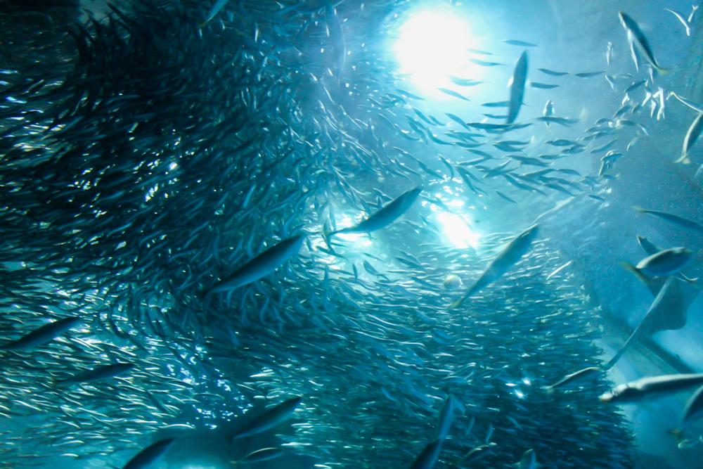 Океанариум Мосркой рай в Канагаве