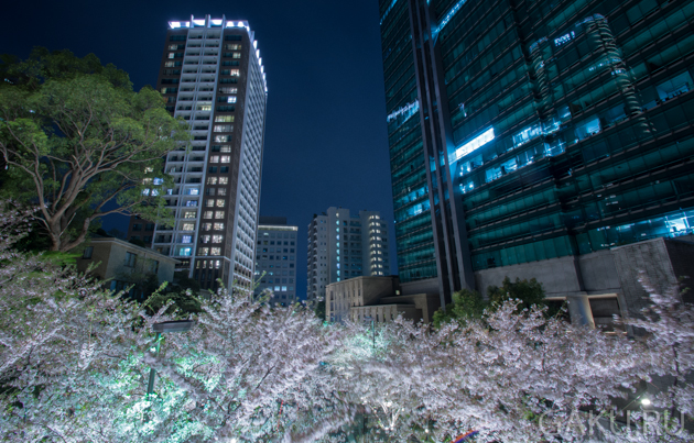 Сакура, Япония, Токио, тур