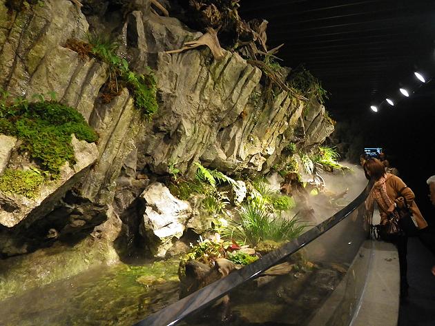 Океанариум Киото
