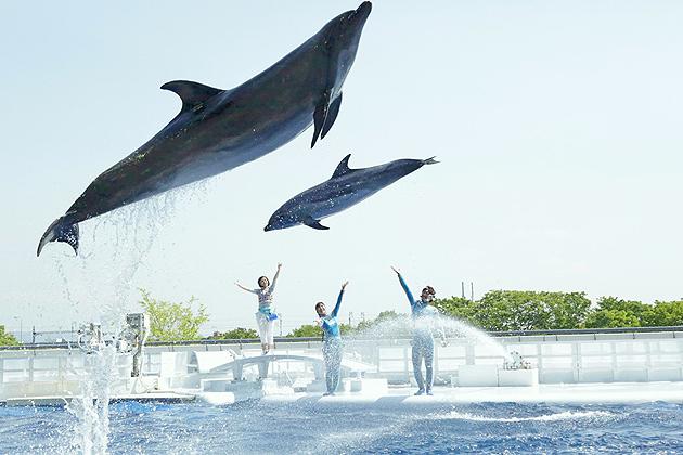 Дельфины, океанариум Киото, шоу