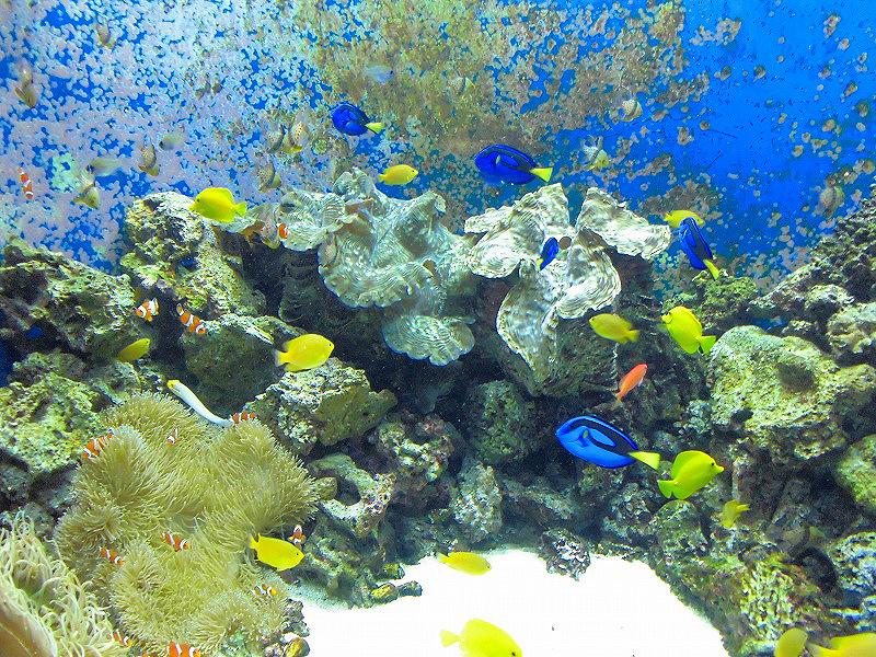 Другие зоны, океанариум Киото