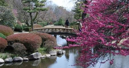 сад Кайраку-эн весной
