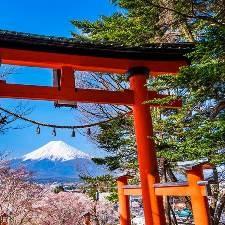 Какое время года лучше подходит для поездки в Японию?