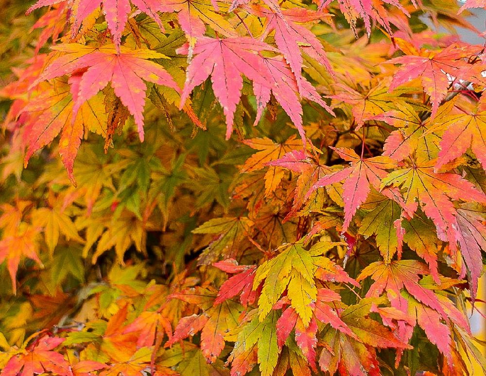 Каруидзава осенью